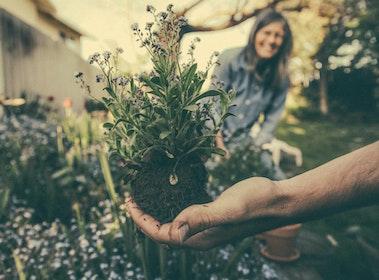 joy in gardening
