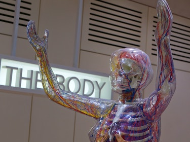 museum exhibition about science and the body